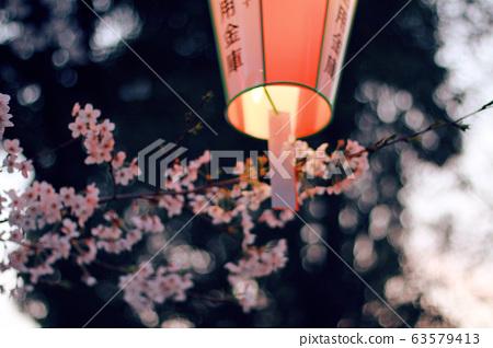 Japan-Cherry Blossom 63579413