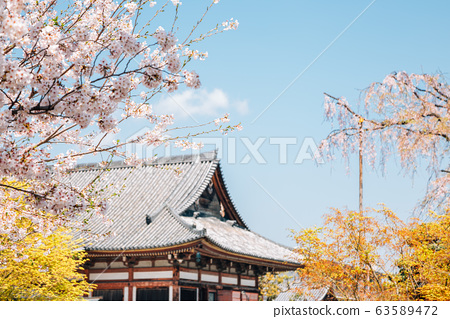Toji temple and spring cherry blossoms in Kyoto, Japan 63589472