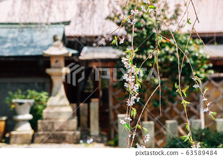 Yoshino mountain Sakuramotobou temple with spring cherry blossoms in Nara, Japan 63589484