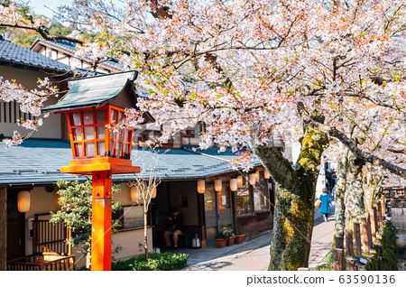 Kinosaki Onsen village with spring cherry blossoms in Hyogo, Japan 63590136