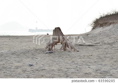 모래 유목 뿌리 63590285