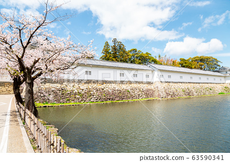 Hikone castle with spring cherry blossoms in Shiga, Japan 63590341