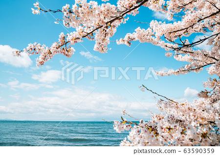 Lake Biwa with cherry blossoms in Shiga, japan 63590359