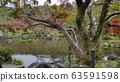 Autumn season colorful of leaves in Maruyama Park 63591598