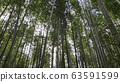 Arashiyama Bamboo Forest famous place in Kyoto 63591599