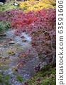 Colorful fall color leaves in Eikando Zenrinji 63591606