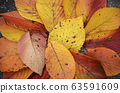 Beautiful dry leaves of yellow fallen to the 63591609