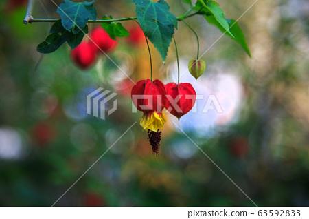 美麗的花朵,花朵的香味,芬芳的香味,芽 63592833