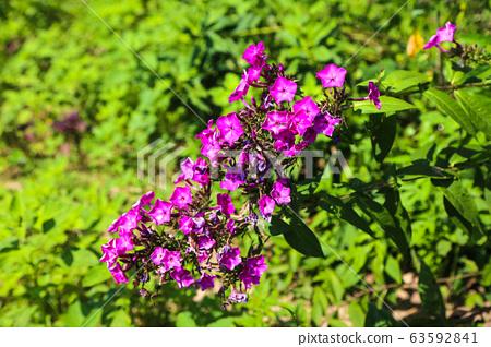 아름답게 핀 들꽃 이야기, 연분홍의 꽃 구경 63592841