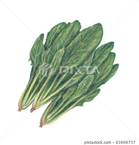 菠菜 63606757