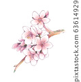 Hand-drawn illustration: Sakura 63614929
