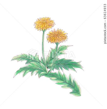 Hand-drawn illustration: Dandelion 63614933