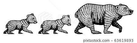 Mummy Grizzly bear with cubs children. Teddy baby. Brown wild animal. Side view. Hand drawn engraved 63619893