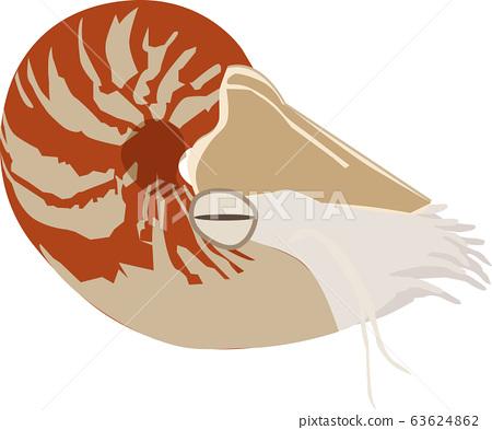 鸚鵡貝類 63624862