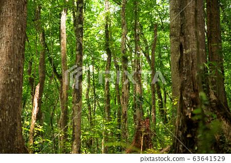 菲律賓比奇森林 63641529