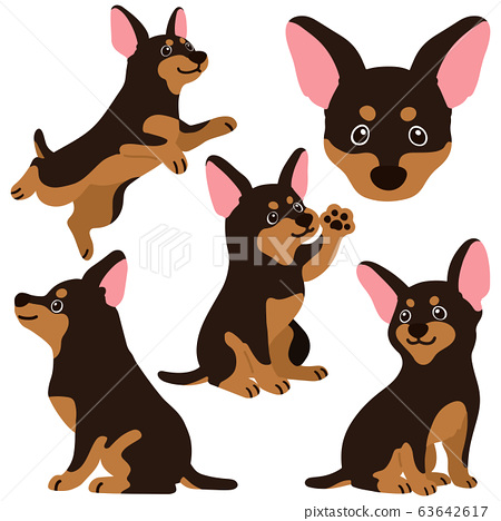 Miniature pinscher in various poses without main line 63642617