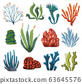 Set of watercolor seaweed and corals isolated on white background. Underwater algae. Aquarium plants collection. Vector marine life. Vector isolated corals and algae. Underwater flora 63645576