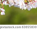 개화 한 벚꽃 나무 63655830