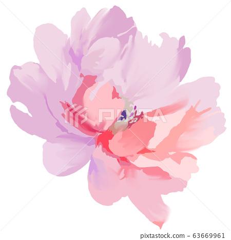 美麗優雅抽象的紫色玫瑰花和牡丹花花卉 63669961