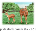 水彩畫在奈良公園的鹿父母與子女 63675173