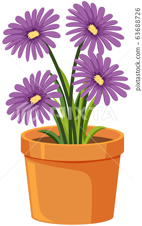 Purple flowers in clay pot on white background 63688726