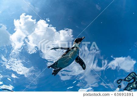 飛企鵝 63691891