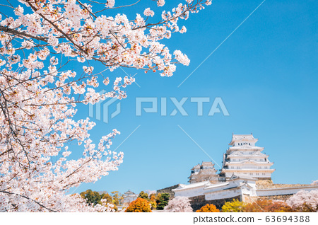 Himeji Castle with cherry blossoms at spring in Japan 63694388
