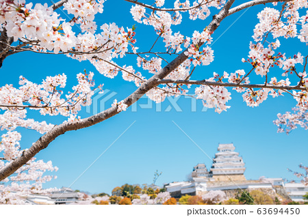 Himeji Castle with cherry blossoms at spring in Japan 63694450