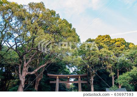 Meiji Jingu shrine Torii gate in Tokyo, Japan 63697593