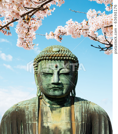 The Great Buddha bronze statue with cherry blossoms at Kotoku-in temple in Kamakura, Japan 63698176