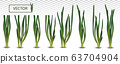 3d realistic green onion isolated on transparent background. Fresh green onion close up. Collection green onion. Top view. Organic. Vector illustration. 63704904