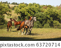 Herd of young sport horses galloping on summer 63720714