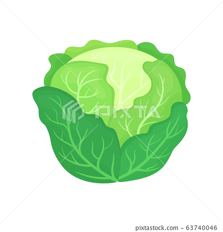 Fresh green cabbage isolated on white background. 63740046