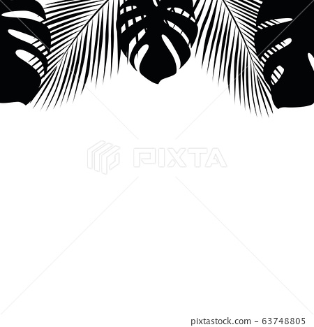 tropical palm leaves on white background 63748805