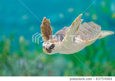 千叶县的水族馆龟 63754968