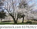 벚꽃 63762822