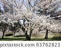 벚꽃 63762823