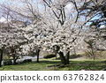 벚꽃 63762824