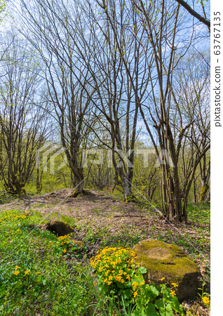 path through forest on a sunny day in spring. 63767135