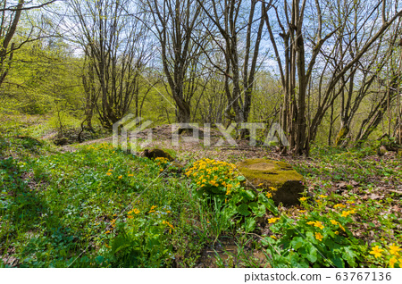 path through forest on a sunny day in spring. 63767136
