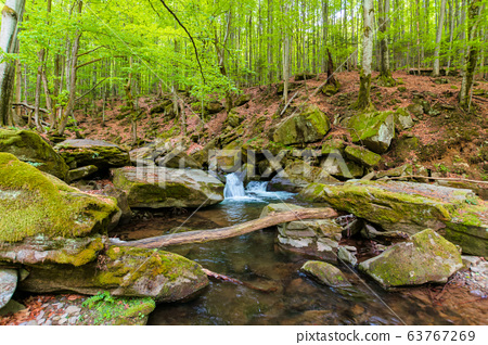 water stream in the beech forest. wonderful nature 63767269