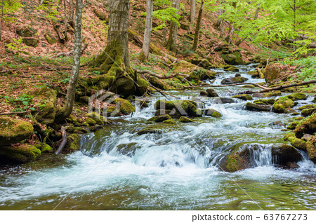 rapid water flow among the forest. trees in fresh 63767273