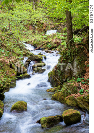 rapid water stream in the forest. powerful flow 63767274