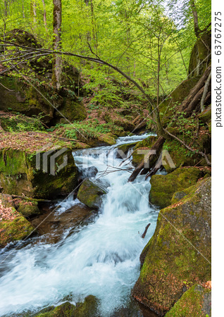 rapid water flow among the forest. trees in fresh 63767275