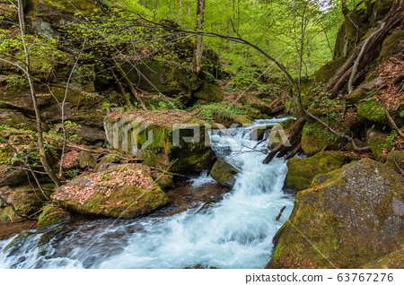 rapid water flow among the forest. trees in fresh 63767276