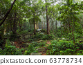 Green Jungle Forest Nature Background 63778734