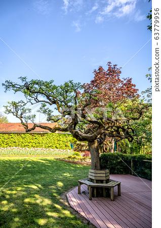 Great Bonsai in a garden 63779956