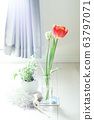 Tulips to decorate the room 63797071