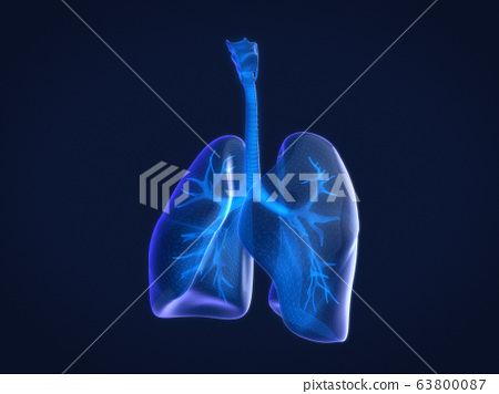 Hologram 3D of  human lungs,Xray of human lungs. 3D rendering. 63800087