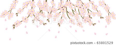 벚꽃과 꽃잎 63801529